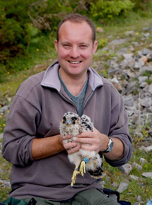 Ed Drewitt with a young Peregrine
