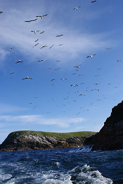 Ed Drewitt watching Gannets on the Flannan Isles