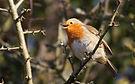 Starlings, Somerset Levels by Ed Drewitt