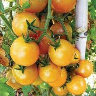 Pomodoro Cherry Giallo