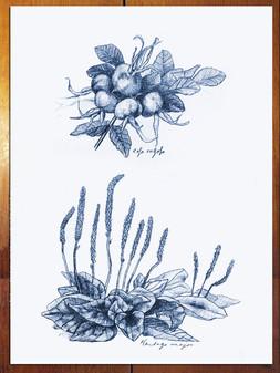 Ruusu & ratamo