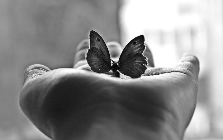 papillon,-main,-photo-noir-et-blanc-2388