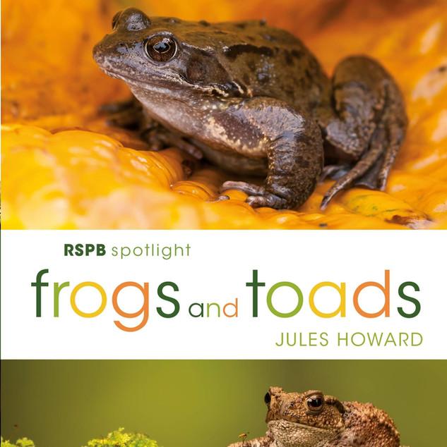 frogsandtoads.jpg