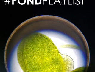 The Pond Playlist Podcast