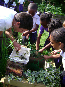 Pond-dipping with urban schools