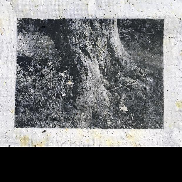 Carr_Untitled (Plantable Artork Series).
