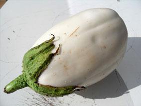 aubergine_blanche