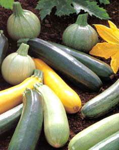 courgettes_x3