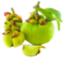 Garcinia-Cambogia-How-Far-Is-It-Safe-for
