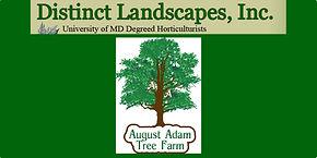DistinctLandscapes-AA Tree Farm.jpg