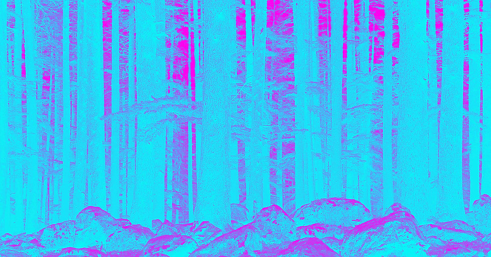 mysterious-forest-PNUK85M.jpg