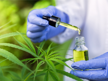 5 Things to Look for When Shopping For CBD