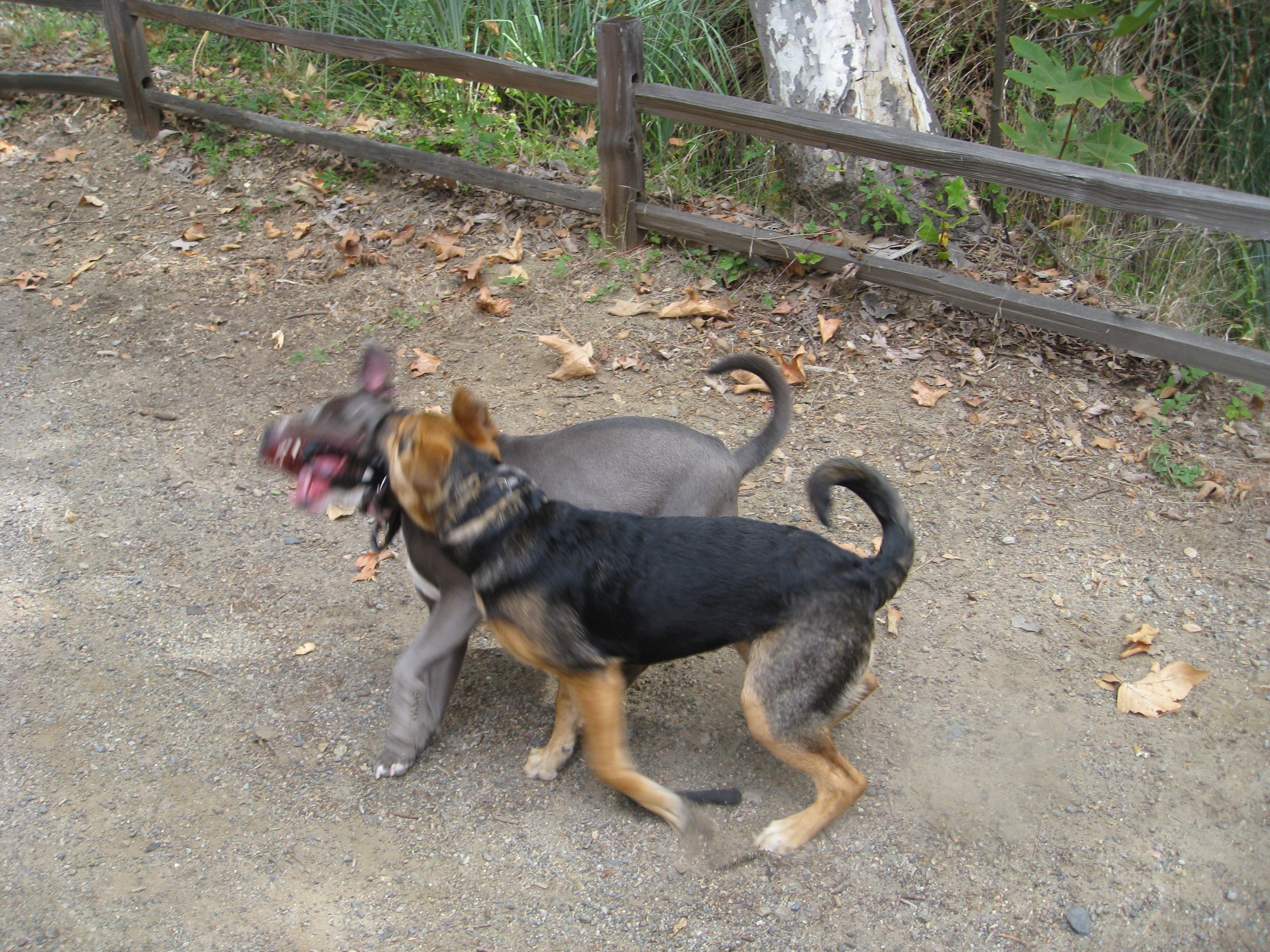 Inter-pack Fighting