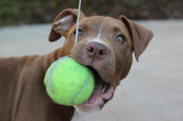Ball !!