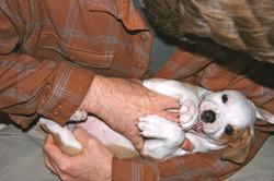 Puppy Aggression