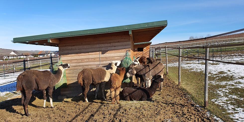 Besuch der Tiere am Stall