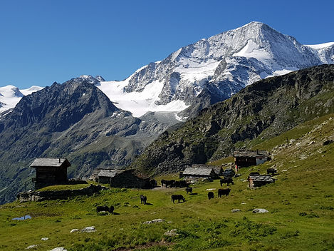 4Bouton aiguille rouge.jpg