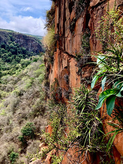 Myrothamnus flabellifolia and Xerophyta schlechteri are dominant on these west facing cliffs