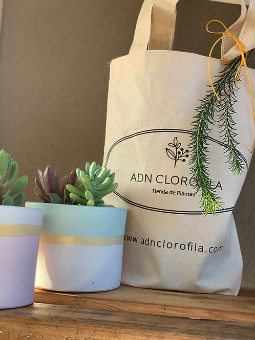 Cilindro color Pastel + Suculenta