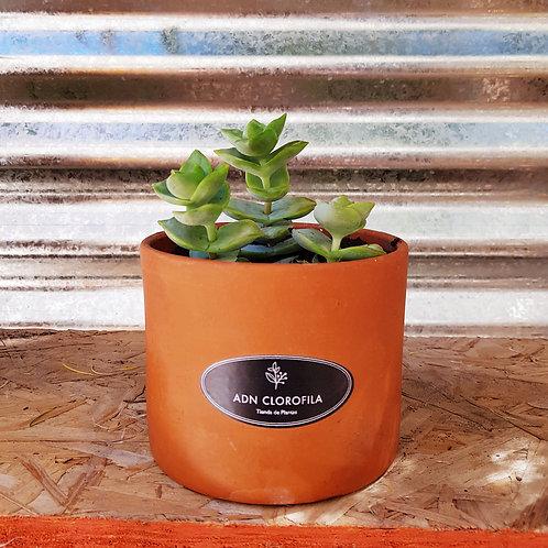 Promo Cilindro Planta Unica 2 x $ 800