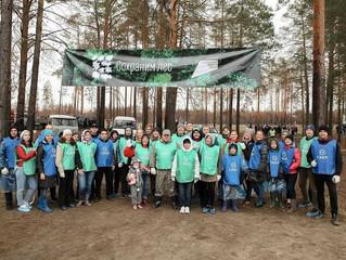 1 000 молодых сосен высадил Сбер в рамках всероссийской экологической акции «Сохраним лес»