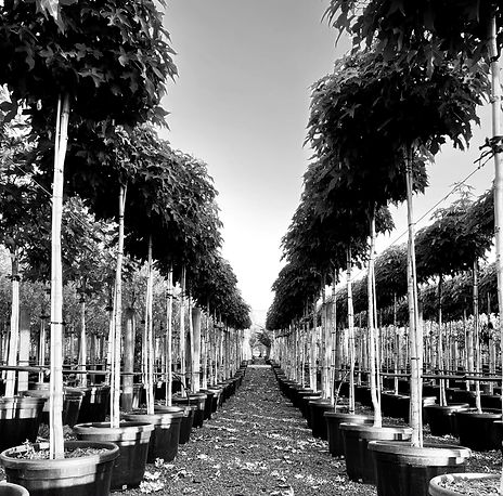 Our World Class Trees B & W.jpg