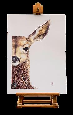Art Prints Wild Grey Fox nikki mcivor art in greytown new zealand