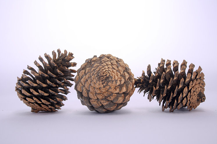 Rose gold Pine cones