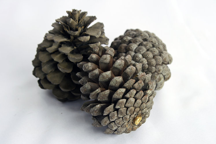 Natural Pinecones