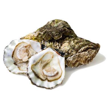 Oyster Live 2.jpg