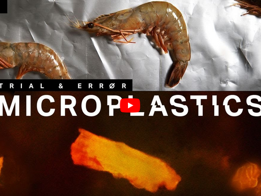 Verge Science: How to find the microplastics in your seafood
