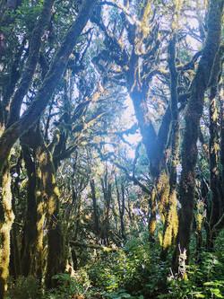 Der Nebelwald wird auch Märchenwald genannt.