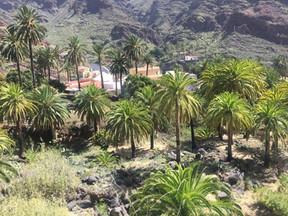 Palmen El Guro