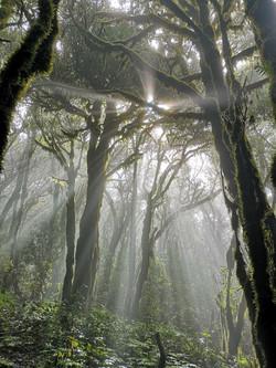 Regenwald La Gomera