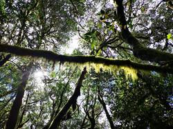 regenwald-lagomera