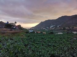 Bananenplantage in Hermigua