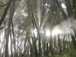 Der Regenwald ein Muss für jeden Wanderer und Hobby-Fotograf
