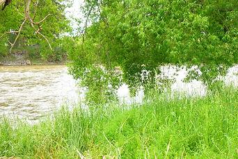 Dirty river.jpg
