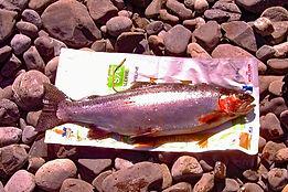 21112019 fish 2  4  lb x 52cm CF 46.619.