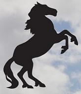 Stallion.jpg
