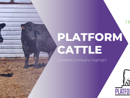 Platform Cattle - Combine Company Highlight