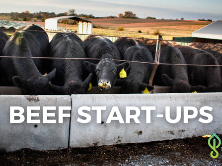 AgTech Insights: A Look Into Beef Industry Start-Ups