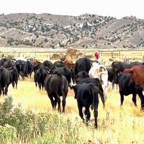 Vanishing Cows And The Space Between Our Cells: Just Another Day At The Ranch