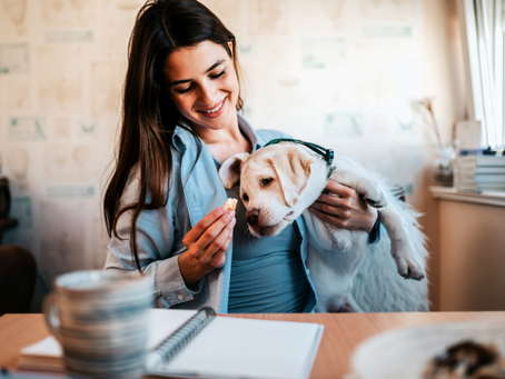 CBD for Dogs and Dosage Guidelines