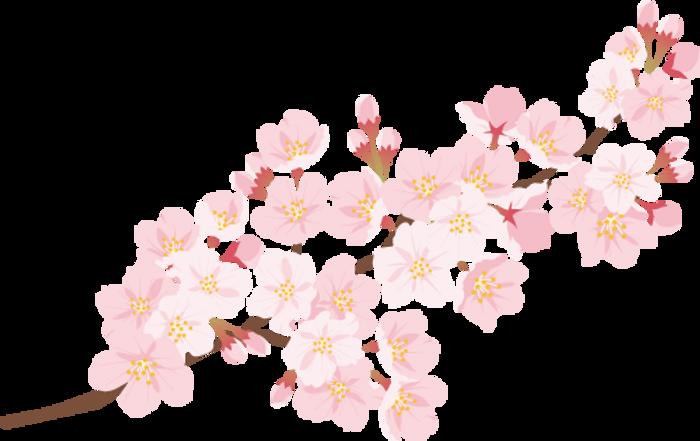 sakura_4.png