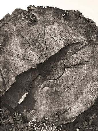 rewood_photo.jpg
