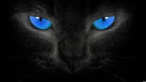 """Gatos e Energia, um pedacinho do meu livro """"Reiki para pets"""""""