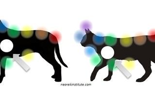 Braquial: o Chakra Chave nos animais