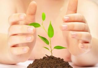 Fitobenzimento – Uma Visão do Reiki na manipulação das bioenergias das plantas