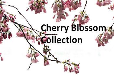 CherryBlossom-001 2x3 Aspect.JPG